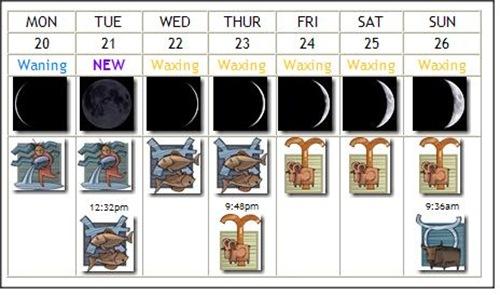 zodiactivities feb 19-26 2012