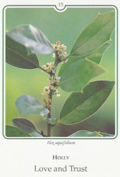 Photo Cards of the Flower Essences Discovered by Dr. E. Bach, by Ilse Maly