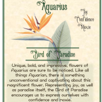 Bird of Paradise, Flower of Aquarius