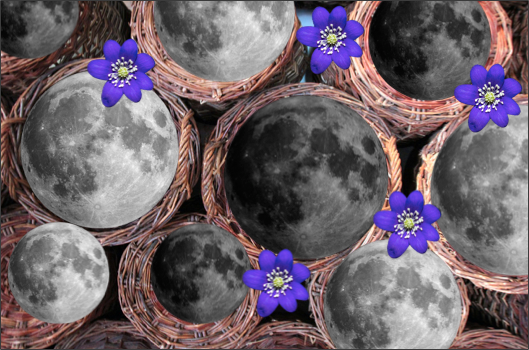Moon Baskets